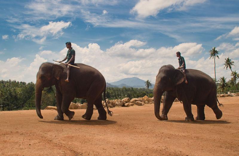 Elephant on land against sky