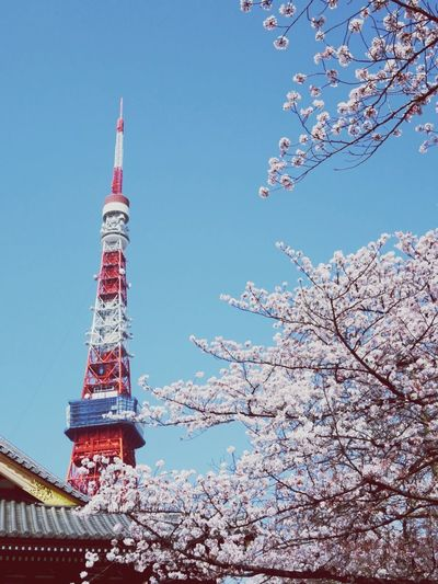 Springtime Tokyo Tower Tokyotower Tokyotower🗼 Zoujouji Temple Cherry Blossoms Cherry Blossom City Red Sky Built Structure Architecture Tower Cherry Tree Television Tower Tall - High