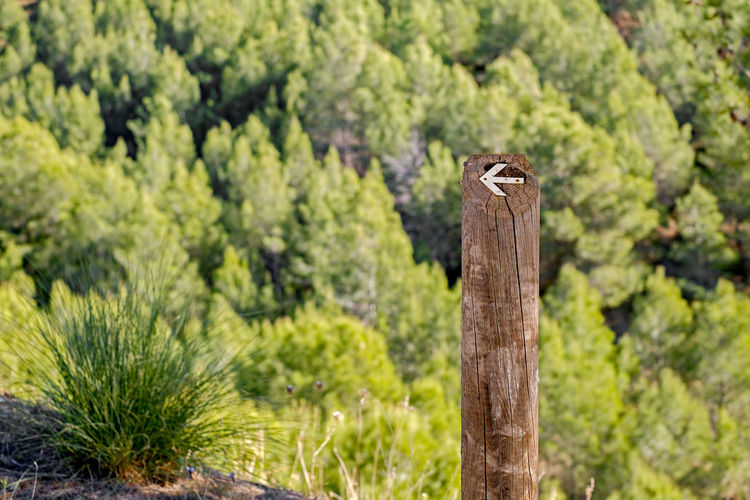 Direction signs on a pole in the forest Animal Themes Animal Wildlife Animals In The Wild Beauty In Nature Bird Close-up Day Direction Direction Sign Focus On Foreground Forest Green Color Mammal Nature No People One Animal Outdoors Perching Plant Sighn Tree Wooden Post