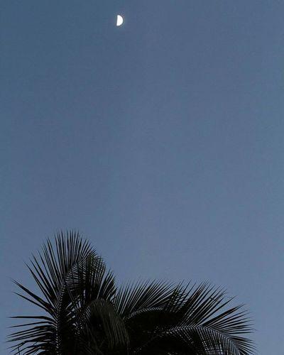 "Goodbye to the sun. Hello to the moon. | From the latest ""Snapshots"" post on thegoldenbullet.org Moonrise Palmtreeperspective Thegoldenbullet Snapshots Oahuinnovember Linkinbio Oahu Kapolei  Hawaiinei Hivibes Nightsky Dusklight Travelphotography Outdoorphotography Canon7d"