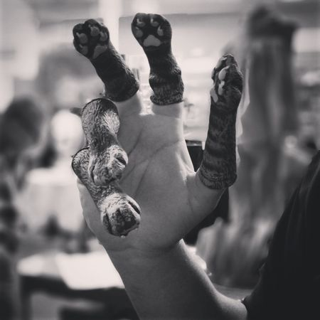 EyeEm Selects Adults Only Only Men Arts Culture And Entertainment One Person Close-up Human Body Part Hand Feet Kitty Fingerpuppet Summit Datenight Goofing Off Cellphone Photography Blackandwhite Beetlejuice Myhusband Manhands WTF Gross Bananaboat MyBOO Tucson Arizona  Awesome_shots