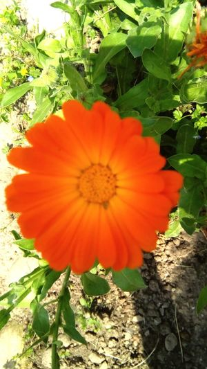 Orange flower nature and beauty Flowers, Nature And Beauty Flower Photography Flower Orange Flower Head Flower Petal Red Poppy Close-up Plant Plant Life Botany