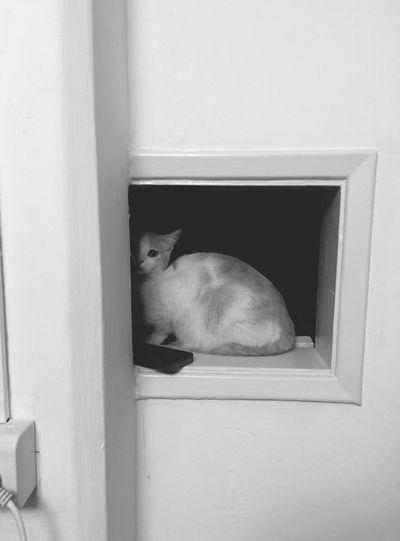 cosette Cat Blackandwhite