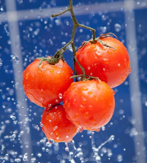 Water splashing on tomatoes