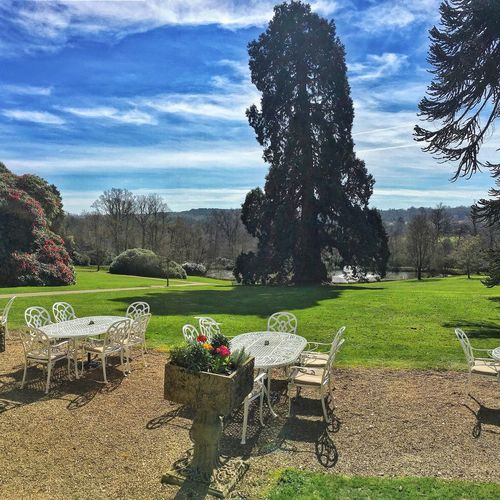 Ashdown Park Hotel, UK Tree Sitting Grass One Person Outdoors Adults Only Sky Nature People Adult Day Only Men EyeEm Nature Lover EyeEm Best Shots EyeEm Gallery The Great Outdoors - 2017 EyeEm Awards