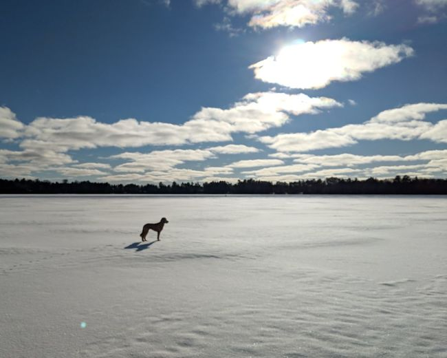 Silhouette person in lake against sky during winter