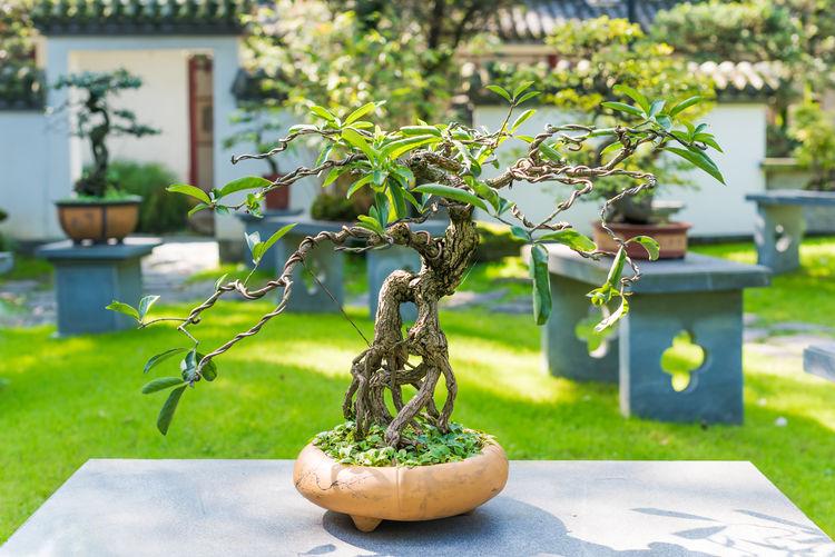 Close-up of bonsai tree on seat in yard