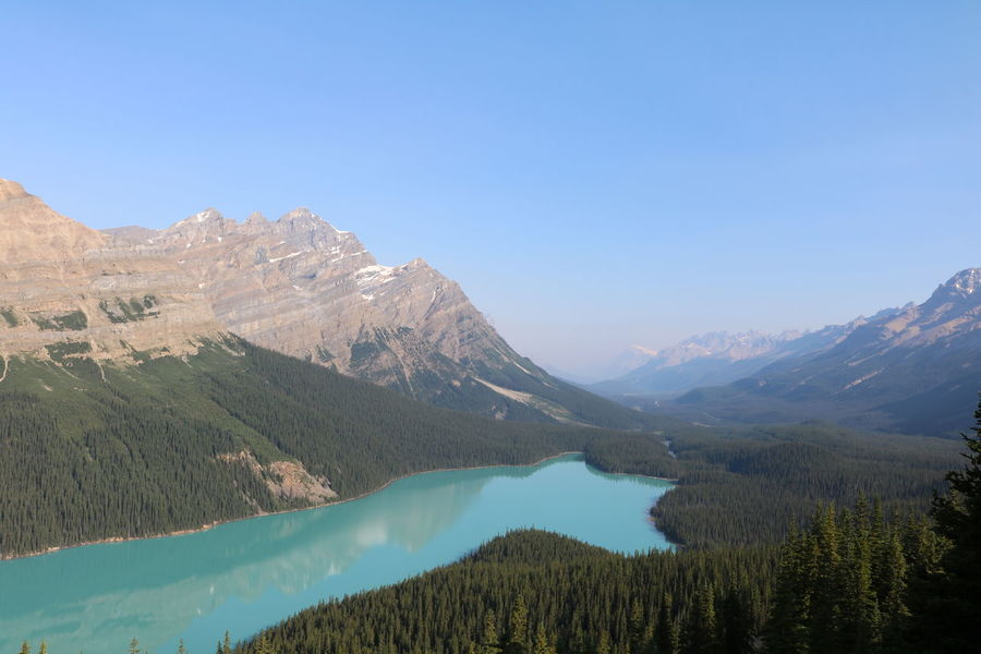 Peyto Lake in Banff National Park, Alberta, Canada Beauty In Nature Blue Clear Sky Day Lake Landscape Mountain Mountain Range Nature No People Outdoors Scenics Sky Tranquil Scene Tranquility Tree Water
