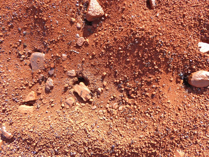 Ants At Work Ants Nest Australian Ants Australian Ants Australian Insects Backgrounds Brown Close-up Day Full Frame Iron Ore Country Nature No People Outdoors Red Earth Red Sand Sand Textured  The Great Outdoors - 2017 EyeEm Awards