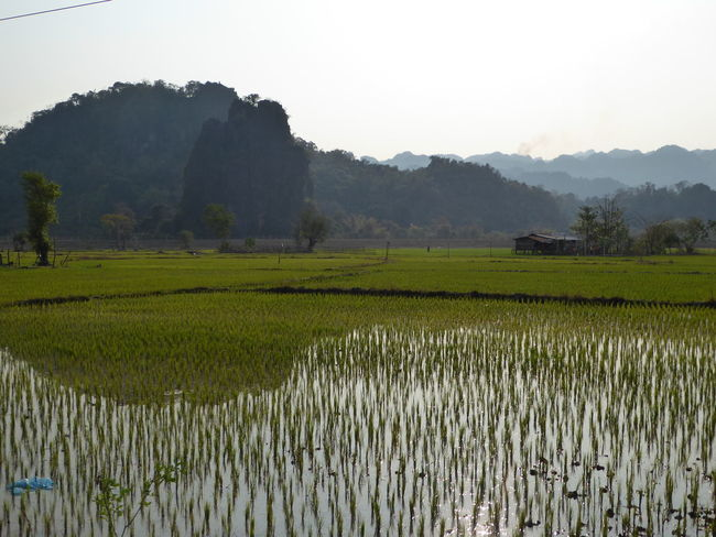 Agriculture Beauty In Nature Cereal Plant Clear Sky Crop  Cultivated Land Farm Farmland Field Green Color Growth In A Row Landscape Majestic Mountain Nature Outdoors Plant Rice Paddy Rural Scene Scenics Tranquil Scene Tranquility Tree Water