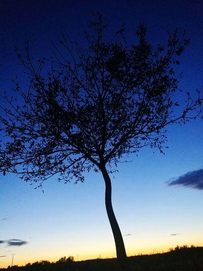 Landscape Silhouette Blue Tree Trunk