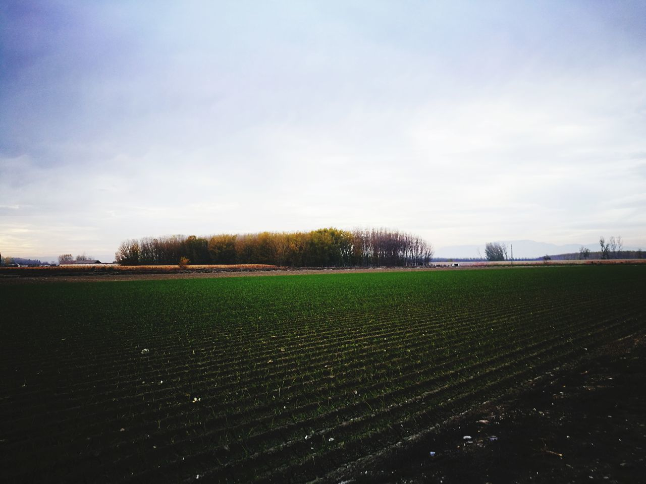 sky, field, beauty in nature, nature, tranquility, no people, tranquil scene, scenics, agriculture, cloud - sky, outdoors, landscape, day, tree