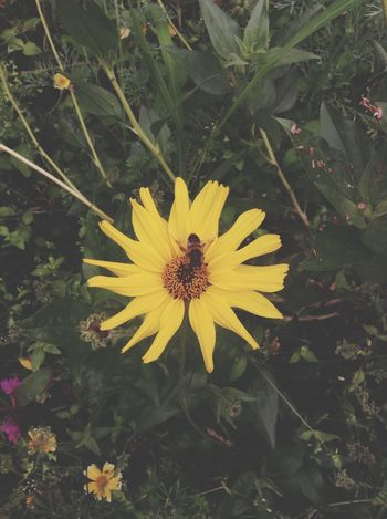 Taken in The Eden Project, Cornwall. The Eden Project First Eyeem Photo