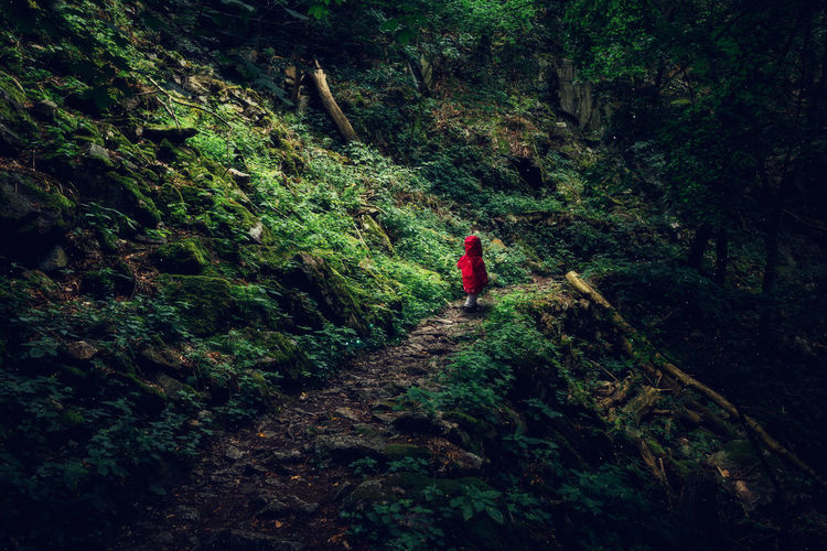Rear view of girl walking in forest