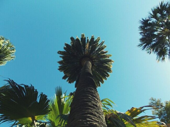 Palm Tree Nature Photography Prespective High Looking Around Simetry Shooting Plants And Trees Open Edit Beautiful Nature Hello World Writing With Light