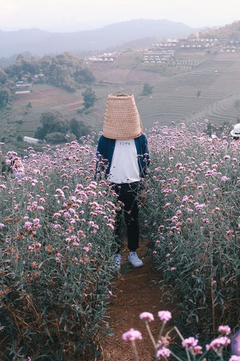 Rear view of woman standing by purple flowering plants on field