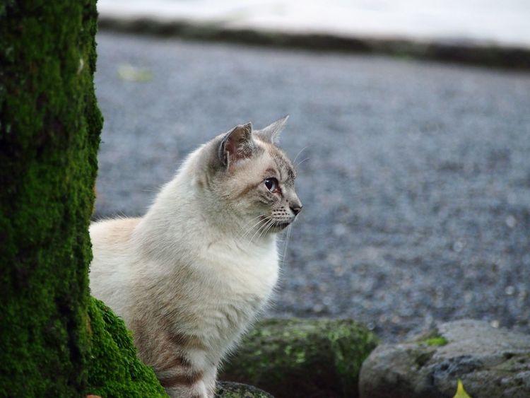 The cat is looking far away. Cat Cat♡ Cat Photography Cats Of EyeEm Hello World M.zuiko Japan Olympus M.ZUIKO DIGITAL