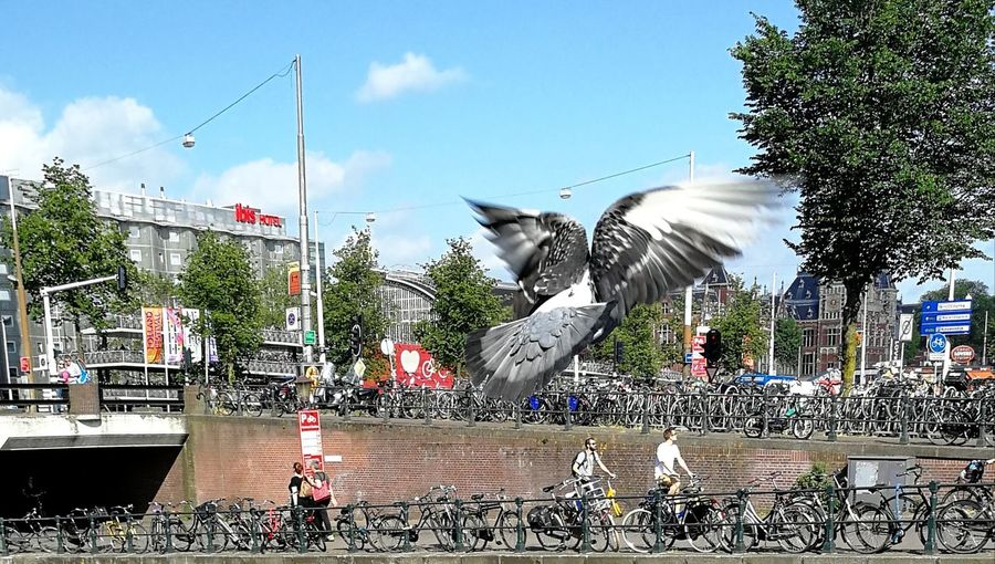 Cloud - Sky Sky Outdoors Day Water Tree No People Bird Pidgeonlife Pidgeons Amsterdam Amsterdamcity Amsterdam Canal Bikes Birds_collection Birds Flying Flying Bird Flying Away Sunny Day