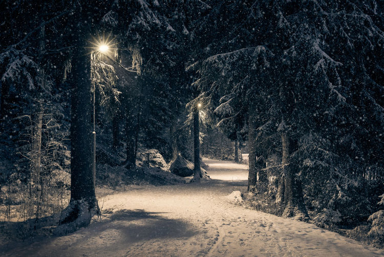 Moody landscape with snow path and light at winter evening in Finland Tree Snow Night Cold Temperature Forest Nature Winter Snowing Street Light WoodLand No People Pine Tree Road Dark Outdoors Blizzard Finland Winter Landscape Nature Path Pathway Trunk WoodLand Atmospheric Mood
