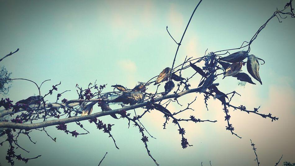 一种像棉花的植物 Enjoying Life Flowers Hanging Out Morning Sky Flowers,Plants & Garden