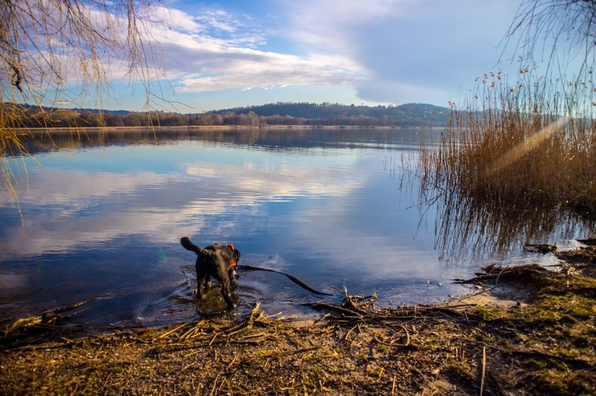 Run away Lake Dog Sky Reflection Pets Water Outdoors Nature Cloud - Sky Tranquility Domestic Animals Animal Themes Day Beauty In Nature Scenics No People Tree