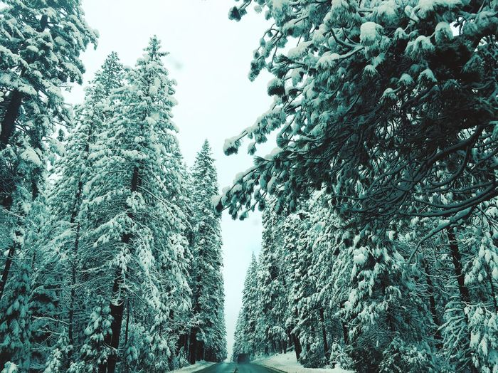 Cloaked Icing Tree Nature Winter Snow No People Beauty In Nature Tranquility Forest Low Angle View Outdoors Landscape Tranquil Scene Mountain First Eyeem Photo