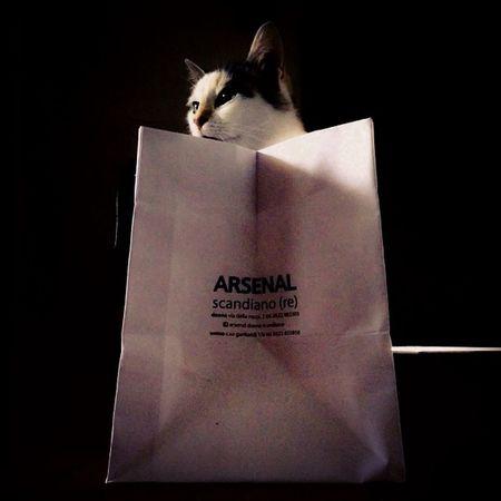 Cosa c'e di nuovo da #ArsenalScandiano? #curiositykilledthecat #shopping #shoppingbag #cat #lifelessordinary #shadows #felinestyle #catinabox #gattomatto #costeraiscool