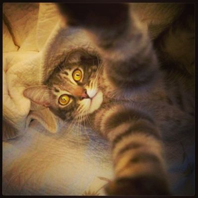 猫猫爱自拍