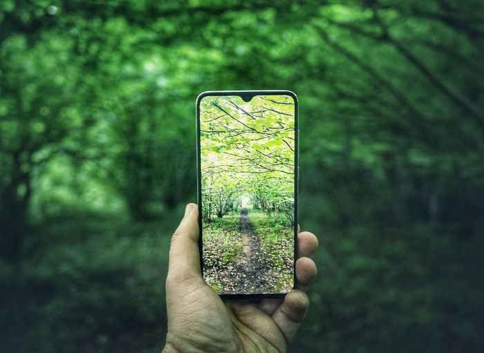 Hand holding mobile phone in forest