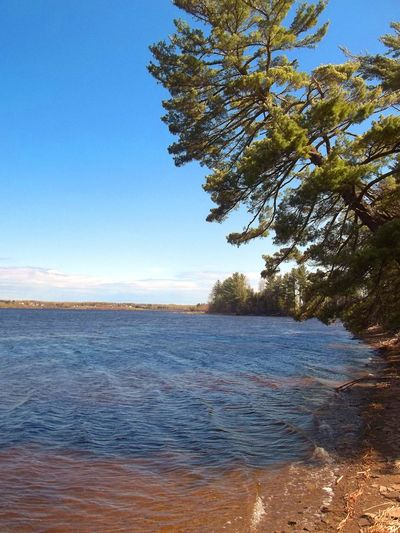 Crooked Pine Tree overhanging river from shoreline Tree Over Water Beach Beauty In Nature Blue Clear Sky Crooked Crooked Pine Tree Day Horizon Over Water Nature No People Outdoors Pine Tree Pine Trees By The Beach River Scenics Shoreline Shoreline Beach Sky Tranquil Scene Tranquility Tree Water Wave