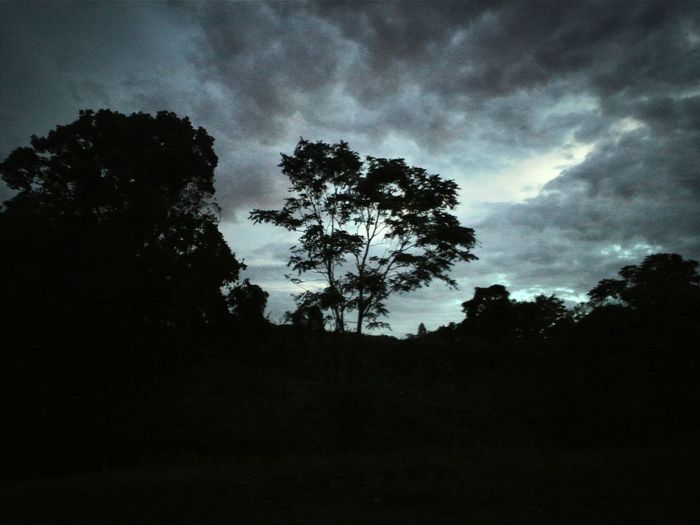 Low angle view of silhouette trees against sky