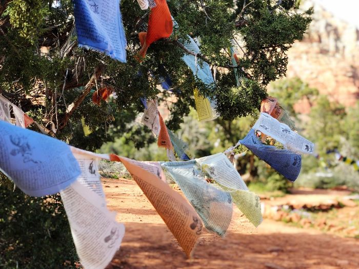 Prayer flags hanging on tree