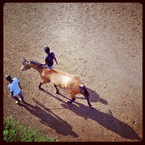 Horse Ranch Human Interest Photooftheday
