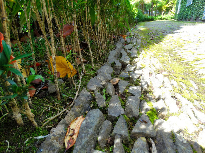Stone flooring. Land Nature Day No People Forest Outdoors Rock Tranquility Growth Plant Tree Trees Plants Leaves Leaf Cobblestone Cobblestone Streets Flooring Floor Path Pathway Hedge Street Stones Stone Rocks