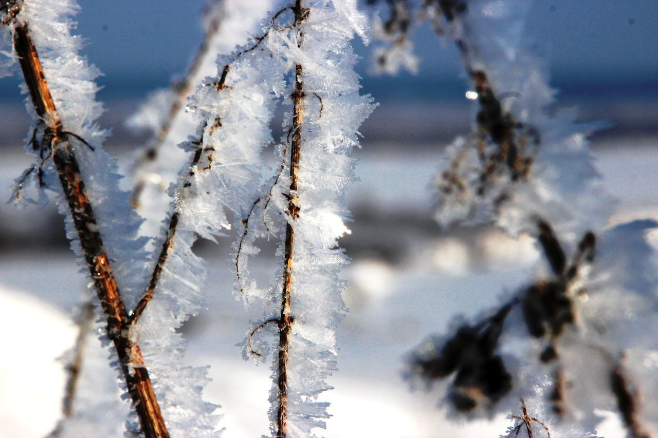 cold temperature, winter, snow, weather, nature, frozen, white color, tree, day, ice, beauty in nature, outdoors, close-up, no people, branch, focus on foreground, tranquility, growth, sky