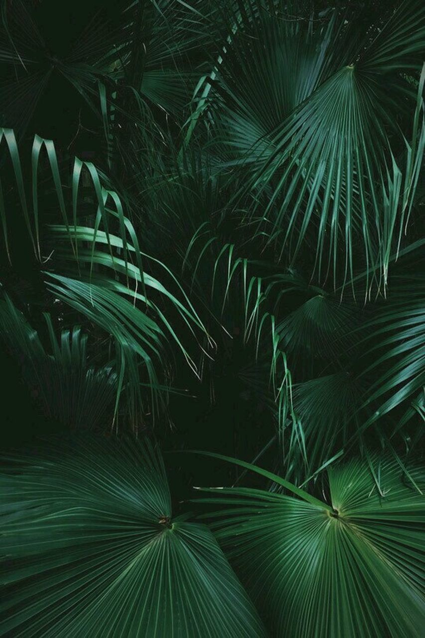 green color, growth, nature, leaf, beauty in nature, palm tree, close-up, frond, plant, outdoors, no people, day, freshness, fragility