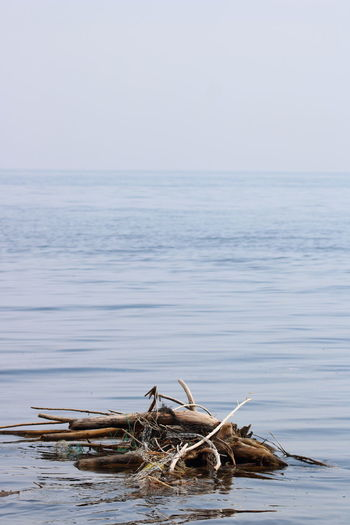 Beauty In Nature Day Dead Plant Driftwood Horizon Horizon Over Water Nature No People Outdoors Plant Remote Scenics - Nature Sea Sky Tranquil Scene Tranquility Tree Water Wood Wood - Material