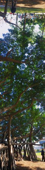 今天遇到的百年樹人 EyeEmNewHere Landscape Travel The View And The Spirit Of Taiwan 台灣景 台灣情 EyeEm Taiwan Tree Day Nature No People Growth Animal Themes Outdoors Beauty In Nature Sky Bird Branch The Street Photographer - 2018 EyeEm Awards