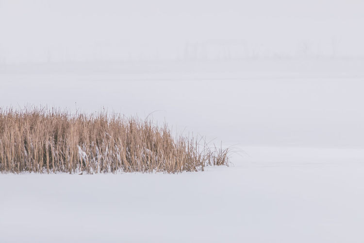 Cold Temperature Winter Snow Tranquility Plant Beauty In Nature Tranquil Scene No People Scenics - Nature Nature Land Day Field Environment Water Sky Covering Tree Landscape Outdoors Snowing