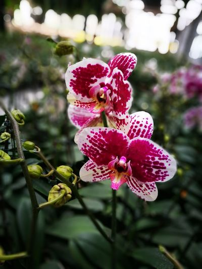 No People Flower Plant Pink Color Nature Close-up Day Outdoors Beauty In Nature Fragility Animal Themes Freshness