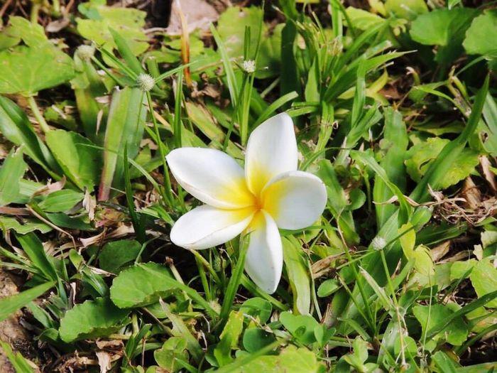 Uma flor na Casa de Rui Barbosa
