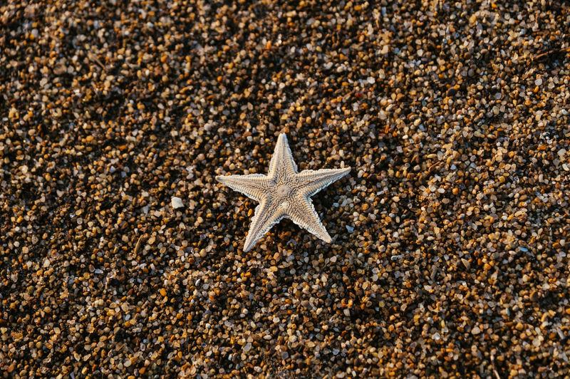 Directly Above Shot Of Starfish On Sand