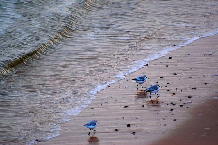 Birds walking on shore of beach