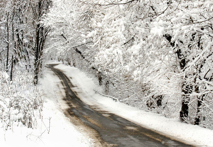 winter road with snow covered trees Snow Cold Temperature Winter Plant Beauty In Nature Road No People Transportation Tree Nature Tranquility Scenics - Nature Tranquil Scene White Color Day The Way Forward Land Direction Outdoors Snowing Extreme Weather Blizzard Snowcapped Mountain Weather Frosted Landscapes