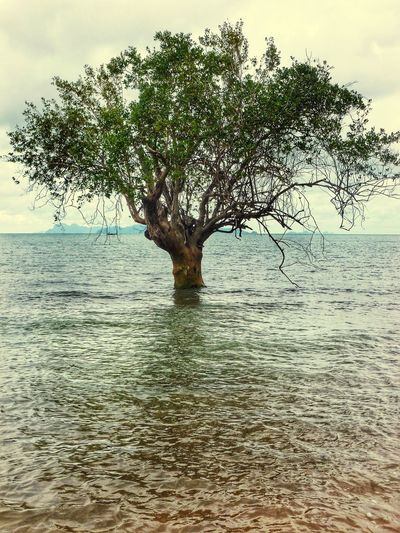 Lonely tree Sea Gypsy Village Koh Lanta Thailand Island Tree Solo Sea Water Tree Growing In Sea Wonder Nature Is Art Wonderful World Landscape_Collection Beautiful Eye4photography  EyeEm Nature_collection Landscape EyeEm Best Shots Discover  Beautiful Nature Admire Nature Adventure Travel Thought Provoking