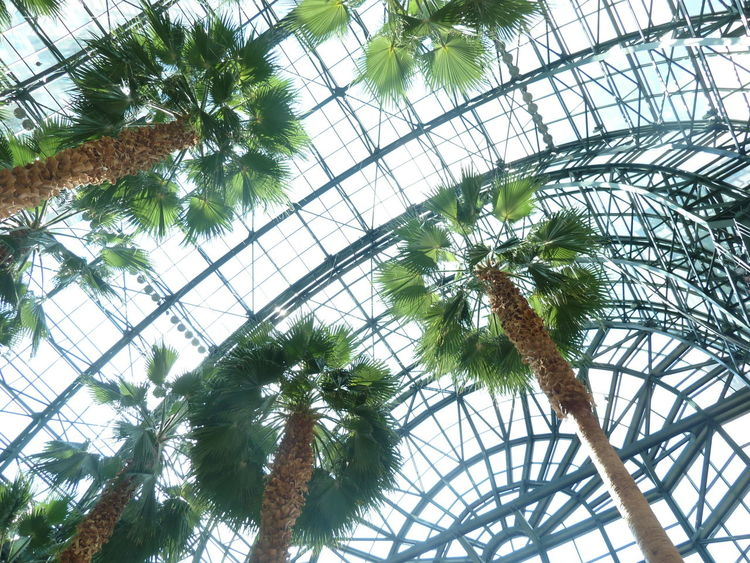 Adapted To The City Built Structure Day Low Angle View New York City Palm Tree Tree Winter Garden