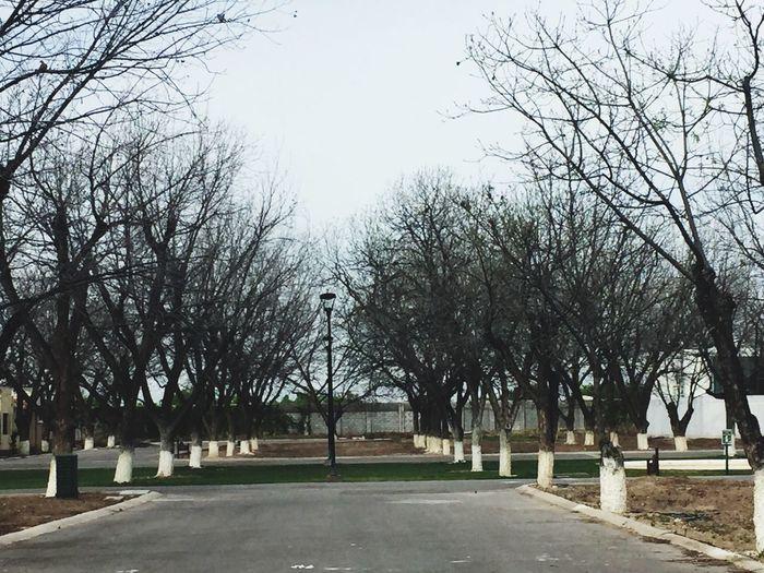 Torreón, Coahuila Forest Trees