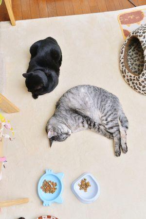 母子の風景 Cat Cute KAWAII ねこ Nikonphotography Black Cat 黒猫 ダンディ Dandy Mycat Japan Scenery
