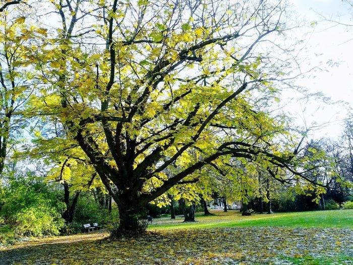 Herbst Anfang Grün Baum 🌳🌲 Nature Tree Growth Nature Day Outdoors No People Tranquility Grass Green Color Beauty In Nature