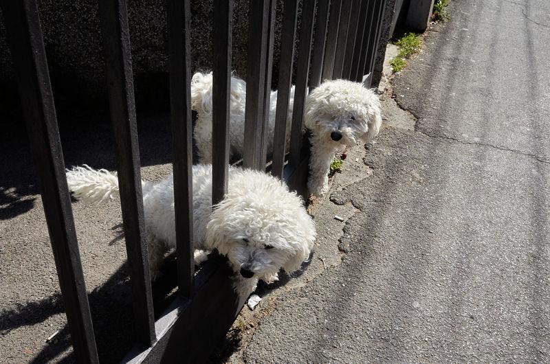 High angle view of dog on fence